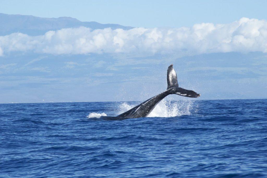 orcas-whale-wale-delfine-wdc-meer