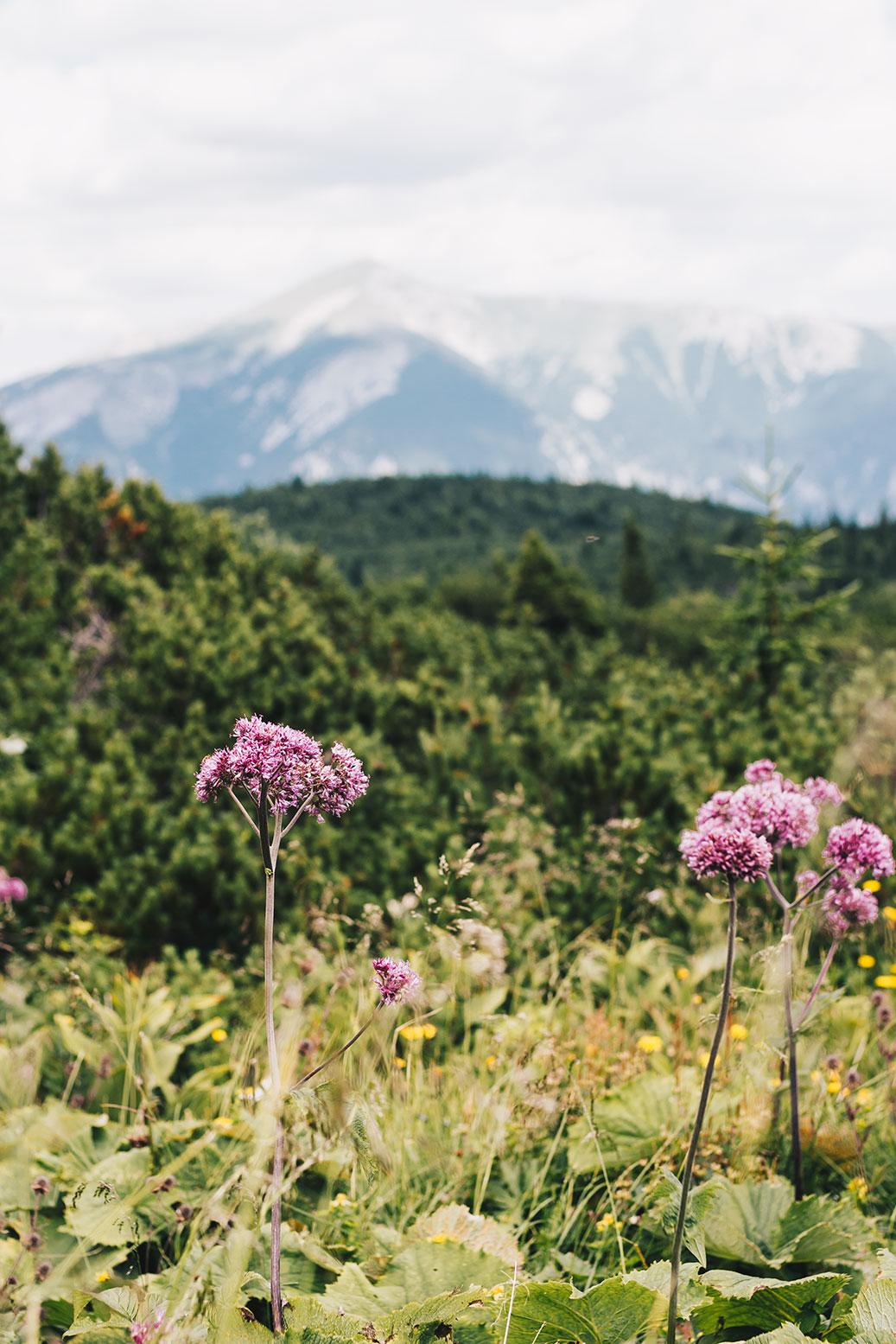 reisen-österreich-wandern-vanillaholica